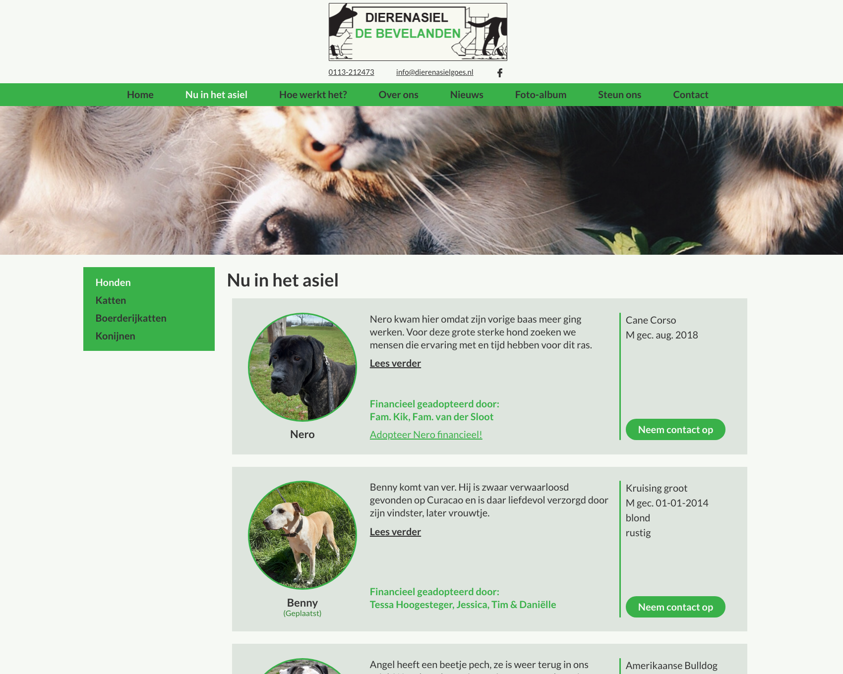Nu in het asiel pagina - website dierenasiel