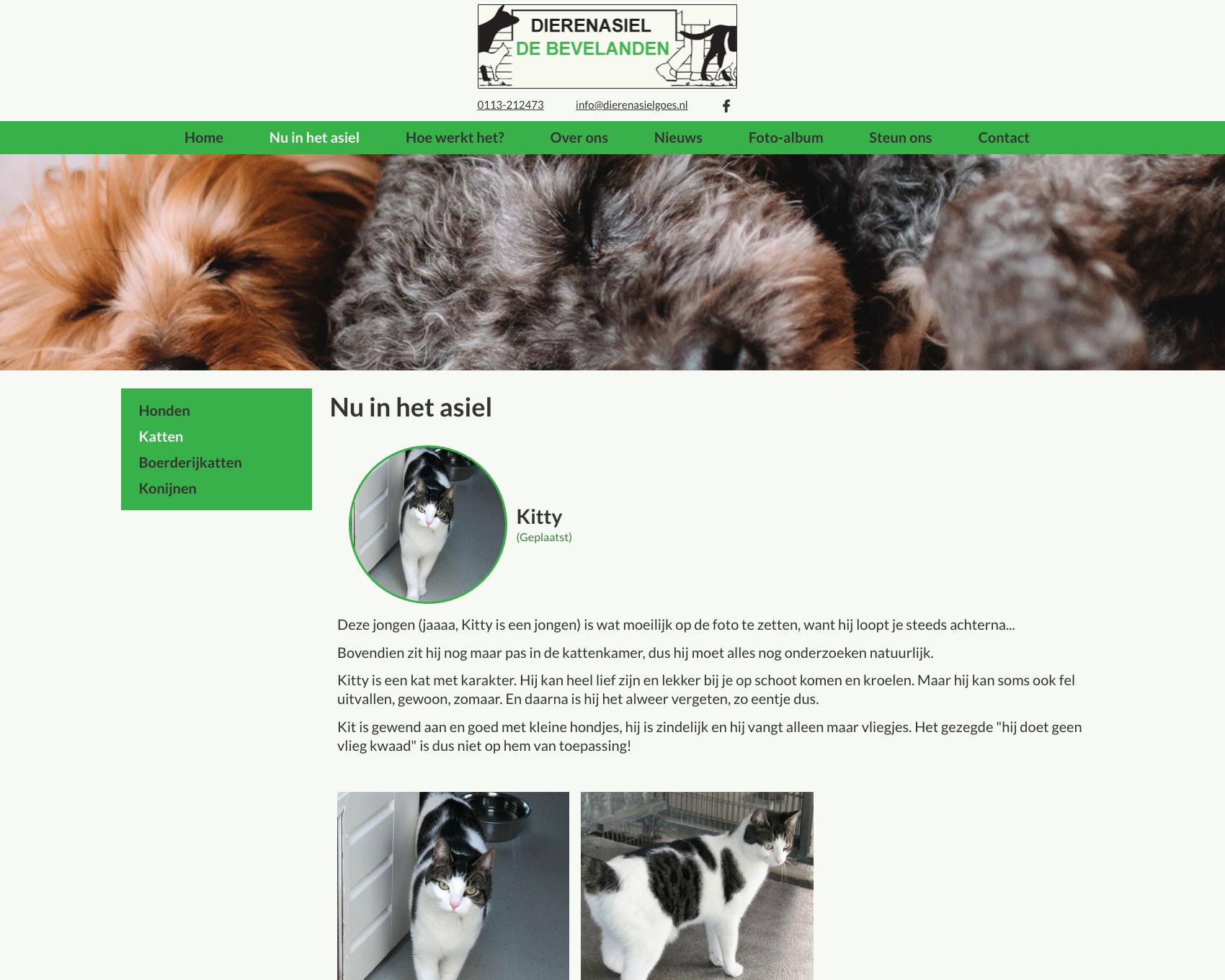 Informatiepagina dier - website dierenasiel